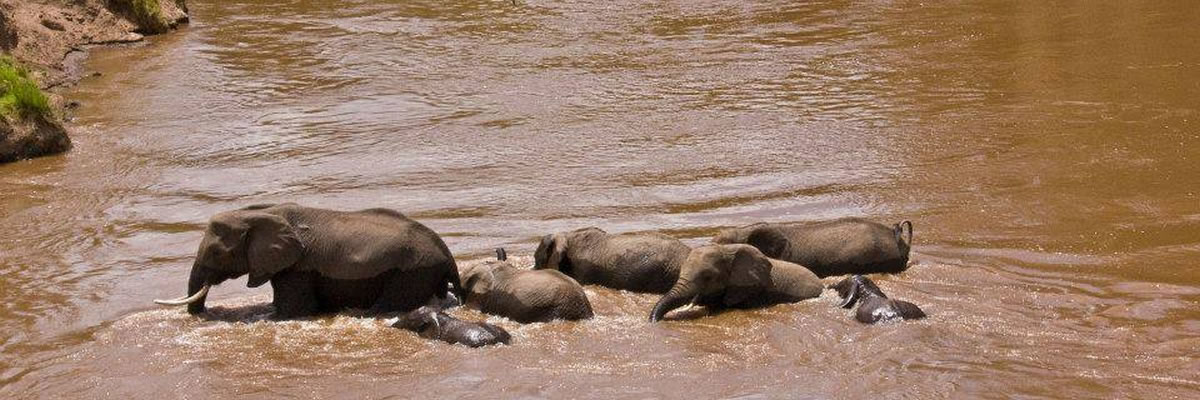 About Funtimes African Safaris